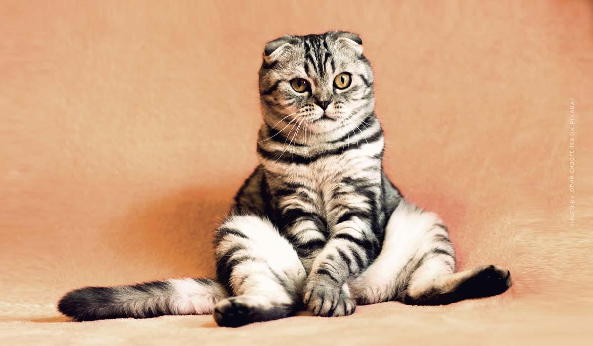 Vacanza con gli animali: Appartamento vacanze, campeggio & mare con cane, gatto & co
